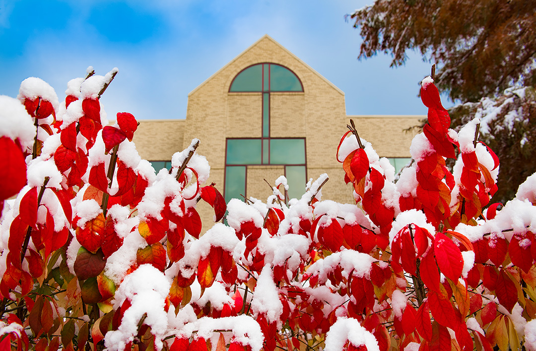 Snow on bushes in front of Cullom-Davis Library